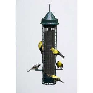 Squirrel Buster Finch Wild Bird Feeder Patio, Lawn