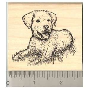 Golden Retriever Mix Breed Dog Rubber Stamp Arts, Crafts & Sewing
