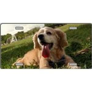 Cocker Spaniel Dog Pet Novelty License Plates Full Color Photography