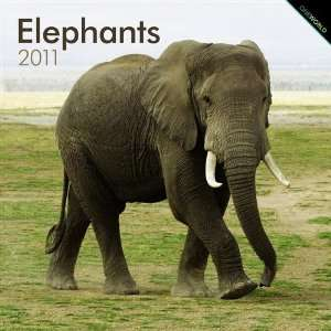 2011 Animal Calendars Elephants   12 Month   30x30cm